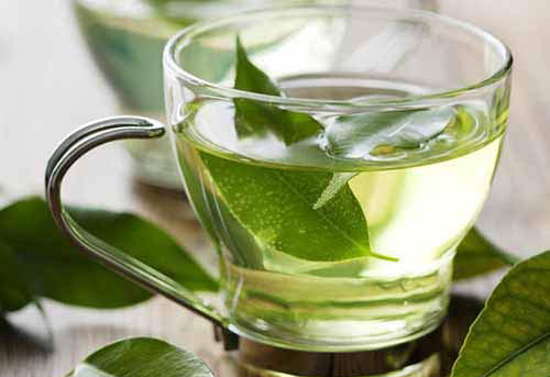 uống trà xanh có giảm cân không